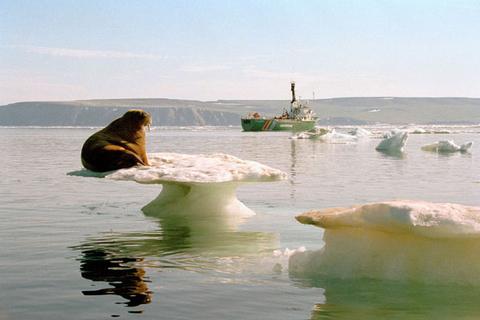 全球变暖对环境的影响