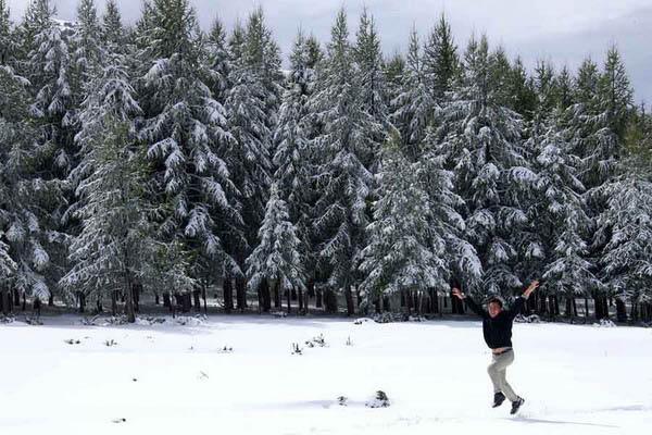 9月4日,一名游客在松树前的雪地里欢呼.