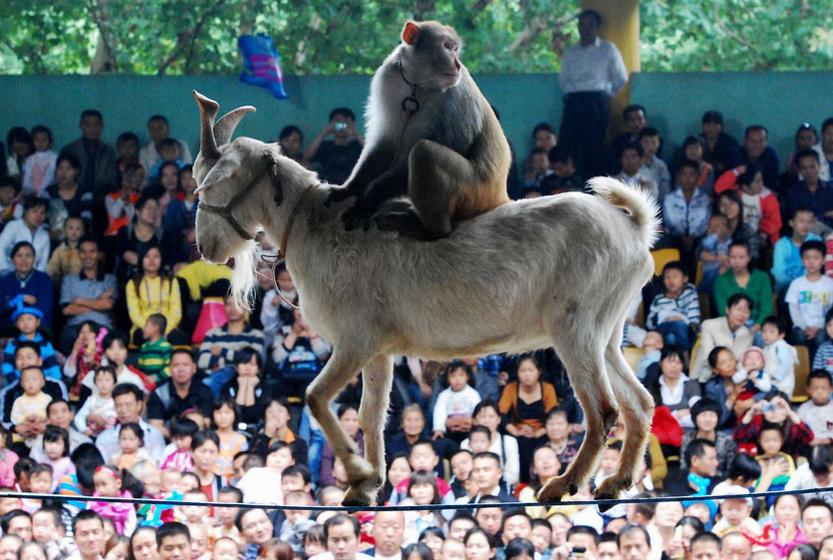 来到南昌市动物园参观