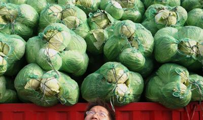 """2011年4月25日,上海,菜农对卷心菜滞销感到无奈。近期,京鲁豫等部分地区出现""""菜贱伤农""""现象,这是由于短期供大于求造成的。东方IC"""