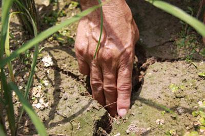 2011年5月19日,江西宜春,受旱的早稻田裂缝达三指宽。在早稻灌浆、中稻育秧移栽的时间点上,发生在稻米主产区长江中下游的这次旱灾,再次引发公众对粮食生产的担忧。邹海斌/CFP