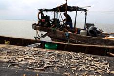 在小清河入海口,已经打不上经济鱼类,只有一些过去不值得打的小杂鱼。