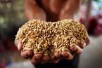 52国仍陷饥馑 近8亿人长期营养不良