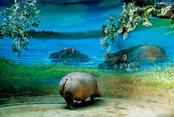 微信头像山水动物风景