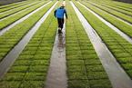 盘前必读:国务院推动农田水利建设