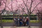 变革中国养老体系的政策组合