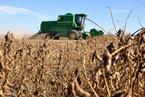大豆库存庞大 专家预计进口增速放缓