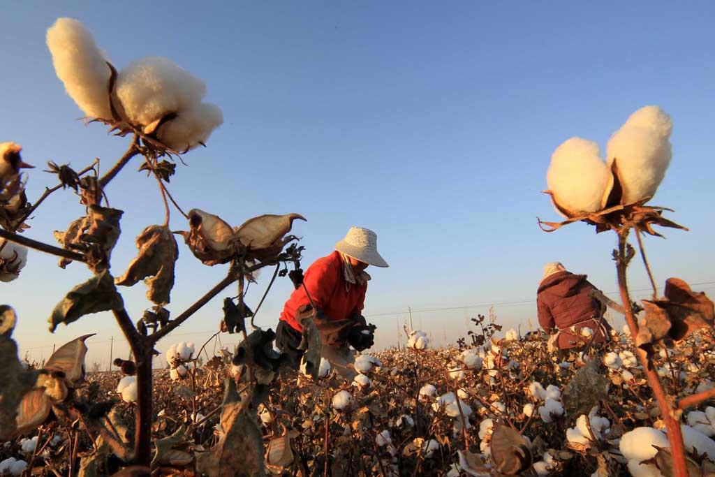 棉花期货的处理过程