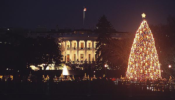 的高达30英尺的巨型圣诞树