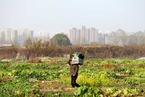 OECD:城镇化将是中国经济主要驱动力
