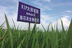 """【封面报道】湖南""""截污""""试验"""