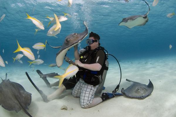 史前海底珊瑚图片大全