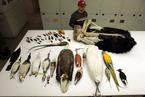 中国科学家领衔国际研究 揭鸟类进化史