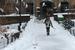纽约 暴风雪后的平静