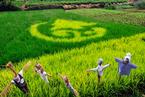 农业补贴改革遇两难 如何继续意见不一