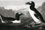 最初的企鹅