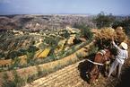 万里:农村改革是怎么搞起来的