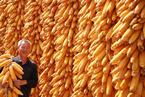 盘前必读:国务院确定稳定粮食生产措施