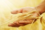 盘前必读:中央推动农业供给侧改革