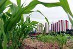 徐林:中国并未出现逆城镇化现象
