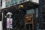 【微纪录】慢下来 看北京第一场雪