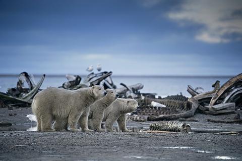 环境污染使动物不能生存的图片