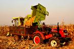 盘前必读:玉米临储改革