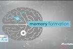 科学家研究植入电极治疗失忆