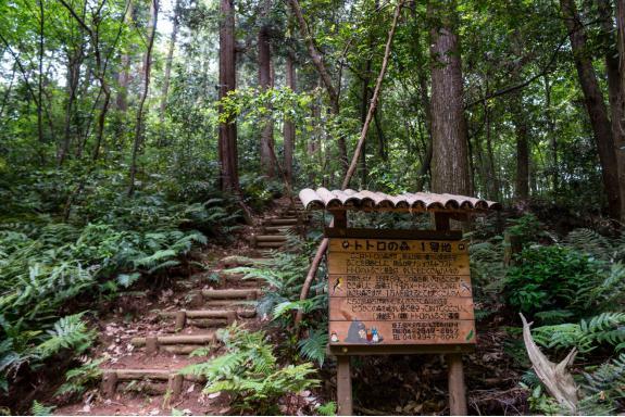 微信聊天背景图森林