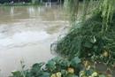 【直播回放】财新记者在宜兴市区南部 路面渍水深度及小腿处
