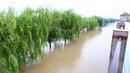 合肥周边溃堤转移数千居民