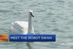能监测水质的机器天鹅