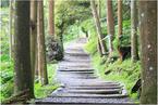 【音频】芬解心得:抉择塑造生命路径