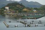 数万吨鲟鱼入侵威胁长江 泄洪仓促养殖户损失惨重