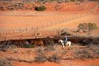 澳洲最大农场获批出售 上海房企参股买家
