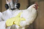 人感染H7N9总体病死率达40% 原因何在