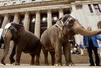 当大象退场