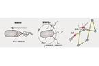 【知识分子】隔空控制细菌运动?他们做到了!