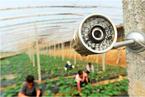【音频】中国农业大数据何时起飞?