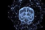 中国科学家揭秘大脑关联学习机制