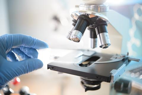人工合成酵母染色体已达8条