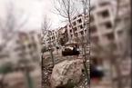 内蒙古包头市土右旗一小区居民楼天然气管道爆炸