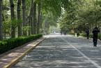 北京市园林局:2020年北京将实现有絮不成灾