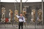 老虎养殖业存废之争
