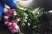 【微纪录】花的旅程——亚洲最大花市背后