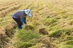 报告称16%农民对生活状态不满意