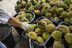 马来西亚总理进京赴会 为何携43颗榴莲当伴手礼