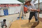 专家:小麦托市收购应打破垄断 引入面粉加工企业
