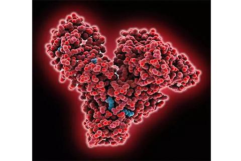 人血清白蛋白空间结构(图片来源:fineartamerica.com)