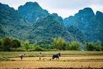 环保部原则通过《农用地土壤环境管理办法(试行)(草案)》